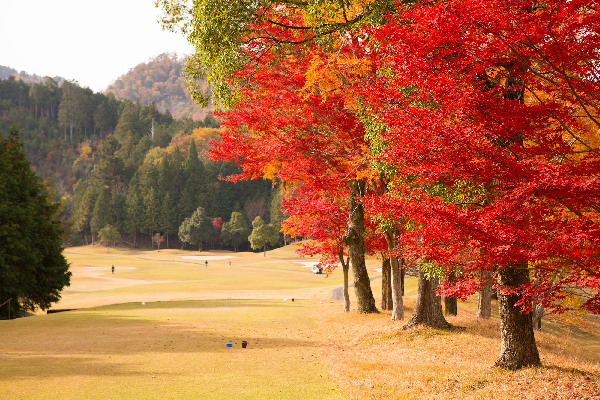 ゴルフ場風景(秋)