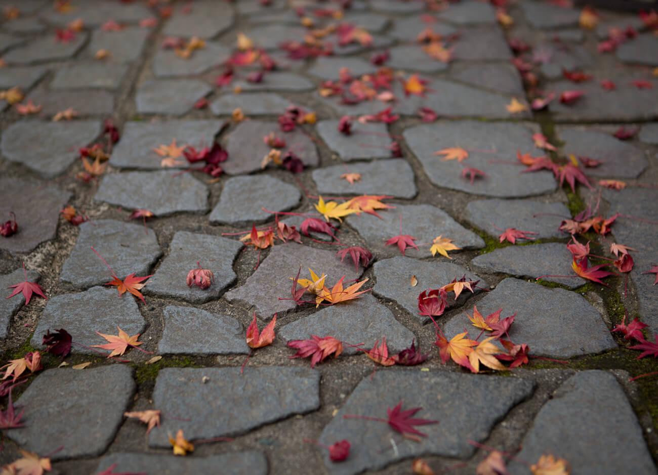 路面の紅葉