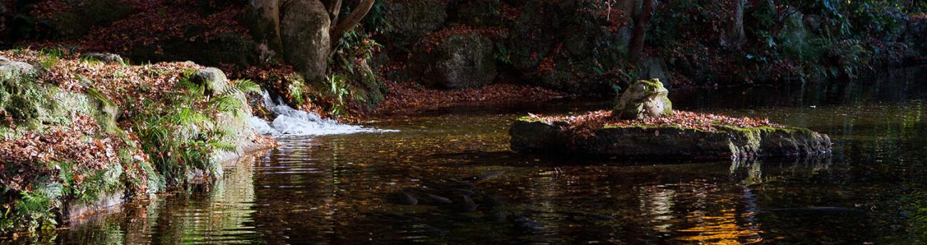 カエル池(バナー用)