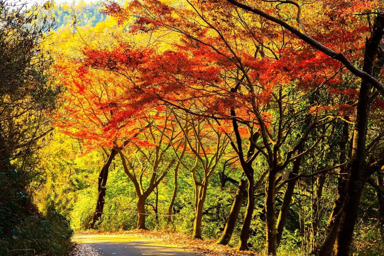 松尾池の紅葉
